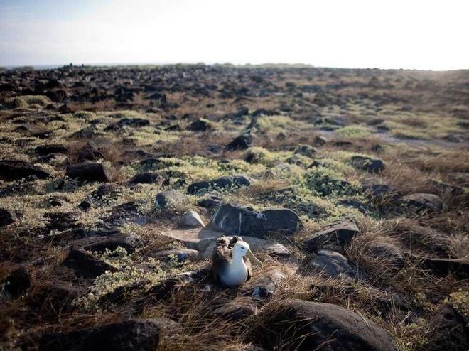 Đảo Albatross, Australia: Ngoài khung cảnh hoang sơ tuyệt đẹp, nơi đây còn có nhiều loại chim độc đáo, nổi bật nhất là loài hải âu lớn. Ngoài ra, bạn còn có thể thấy hải cẩu Australia, hải cẩu New Zealand và chim cánh cụt. Đây là khu bảo tồn thiên nhiên, không mở cửa cho công chúng.