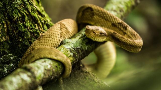 Đảo rắn, Brazil: Trên hòn đảo này có tới hơn 5.000 con rắn độc, địa điểm hấp dẫn những người ưa phiêu lưu. Tuy nhiên, hải quân Brazil không cho phép du khách đặt chân lên đảo vì lý do an toàn. Chỉ các nhà nghiên cứu mới được phép khám phá hòn đảo này.
