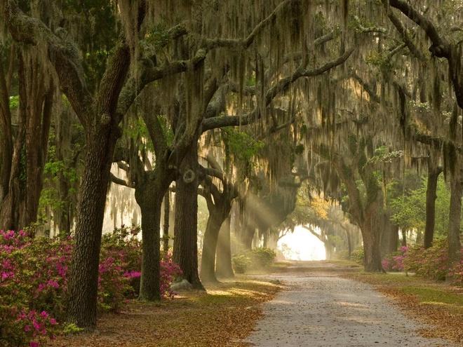 Nhung trai nghiem khong the bo qua o My hinh anh 10 Săn ma ở Savannah, Georgia: Savannah là một trong những thành phố đẹp nhất miền Nam nước Mỹ, với tour tham quan các địa điểm ma ám nổi tiếng như nghĩa trang Công viên Colonial, nghĩa trang Bonaventure và nhà của Mercer Williams... vào buổi đêm.