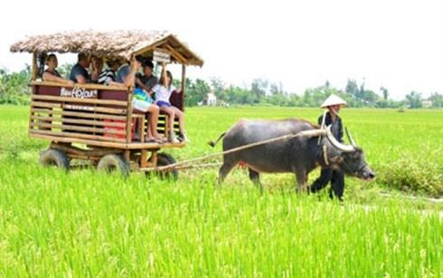 Trai nghiem du lich 'Mot ngay lam nong dan' tai Phu Yen hinh anh