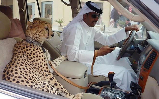 Dubai dang ghet nhu the nao? hinh anh