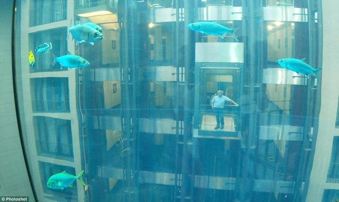 Be ca co ca thang may ben trong hinh anh 3 Có lẽ đặc điểm ấn tượng nhất của khu giải trí này là du khách có thể sử dụng thang máy chạy dọc giữa bể cá.
