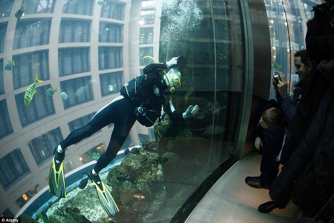 Be ca co ca thang may ben trong hinh anh 5 Du khách có thể quan sát các loài cá được cho ăn vào lúc 14h. Khoảng 8 kg thức ăn được sử dụng cho toàn bộ bể.