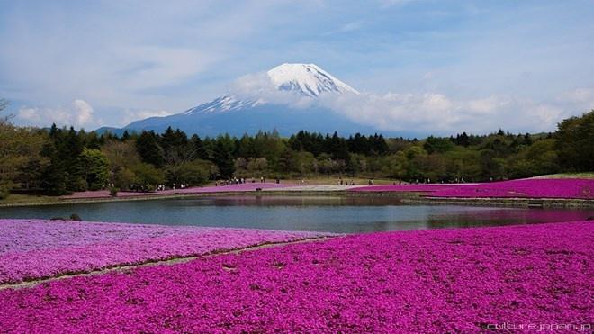 Vườn Quốc gia Fuji-Hakone-Izu, Nhật Bản: Vườn quốc gia đầy màu sắc này nằm ở phía Tây Nam của Tokyo và có diện tích 1.227 km vuông. Trong công viên có một núi lửa không hoạt  động cao hơn 3,5 km. Những ngọn núi ở đây thường được bao phủ bởi những đám mây tạo ra một cảnh quan thơ mộng và quyến rũ.