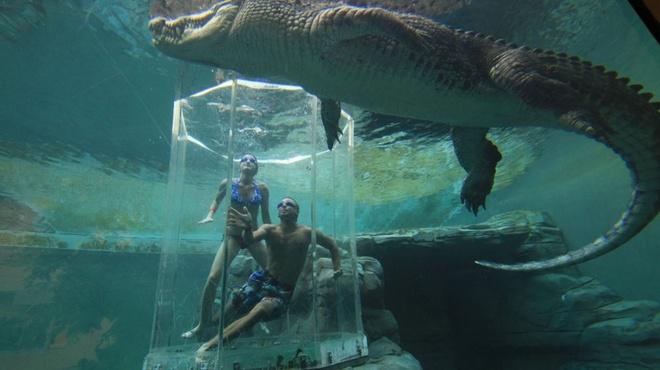 Crocosaurus Cove, Australia: Tới đây, du khách sẽ có cơ hội bơi cùng những con cá sấu nước mặn khổng lồ, nổi tiếng về độ hung dữ. Bạn sẽ được đưa vào trong lồng kính, hạ xuống bể và quan sát chúng ăn mồi.