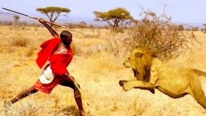 Nhung nghi le dang so de chung to ban linh dan ong hinh anh 3 Đấu với sư tử: Hiện tại truyền thống đấu với sư tử của người Masaai ở Kenya và Tanzania đã không còn được duy trì, nhưng trước đó, cách duy nhất để trở thành một người đàn ông thực thụ là đâm chết một con sư tử. Các nam thanh niên sẽ phải làm lễ cắt bao quy đầu, sau đó đi theo nhóm hoặc một mình để săn và giết một con sư tử.