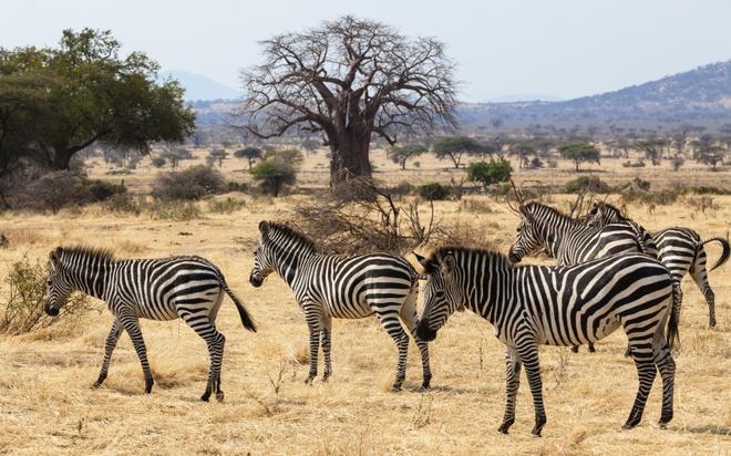 Nhung thien duong du lich giup cai nghien cong nghe hinh anh 5 Đi ngắm voi ở trại Jongomero, Tanzania: Khu nghỉ dưỡng ở miền Nam Tanzania này yêu cầu du khách giao các thiết bị công nghệ cho họ trong thời gian nghỉ tại đây. Thay vào đó, bạn sẽ được chiêm ngưỡng những động vật hoang dã tuyệt vời trên đồng cỏ châu Phi.
