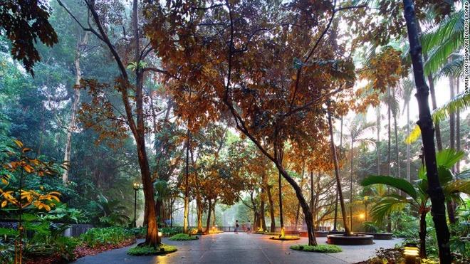Rung mua nguyen sinh giua long Singapore hinh anh 1 Vườn thực vật Singapore là điểm tham quan đầu tiên ở Singapore được UNESCO công nhận là Di sản thế giới và là khu vườn đầu tiên ở châu Á nhận được danh hiệu này.