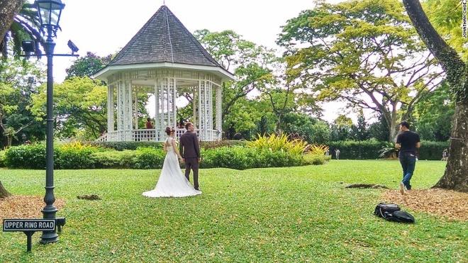Rung mua nguyen sinh giua long Singapore hinh anh 4 Vọng lâu được xây dựng từ năm 1930 là một trong những điểm nổi bật của vườn.