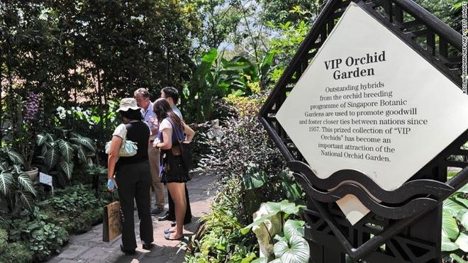Rung mua nguyen sinh giua long Singapore hinh anh 6 Nằm trong khuôn viên Vườn thực vật, Vườn phong lan quốc gia có một trong những bộ sưu tập phong lan lớn nhất thế giới, với hơn 450 loài. Khu VIP có những loài lai tạo được đặt tên theo các ngôi sao và nguyên thủ quốc gia từng tới thăm Singapore.