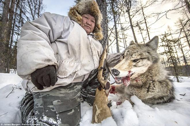 Nhung nguoi san soi o Siberia hinh anh