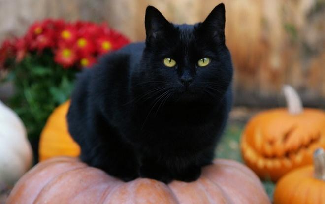 Y nghia cua cac bieu tuong Halloween hinh anh 1