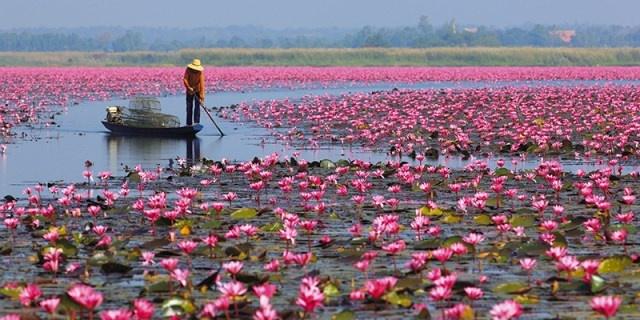 Ho hoa sung khong lo o Thai Lan hinh anh