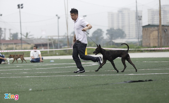 Các cuộc thi được tổ chức dựa trên nền tảng về quy định và chuẩn mực của Liên đoàn nuôi chó giống thế giới (FCI), nhằm đánh giá và tôn vinh những con chó đẹp, chuẩn mực nhất theo những bản tiêu chuẩn riêng cho mỗi giống, theo sự công nhận rộng rãi trên toàn thế giới.