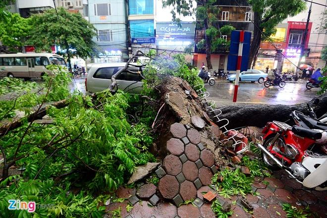 Ha Noi ngon ngang sau con dong manh bat ngo hinh anh 5 Rễ cây bị bật gốc trên nhiều tuyến phố.