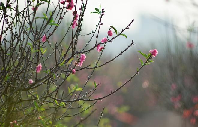 Dao no som tren vuon hoa noi tieng Ha thanh hinh anh