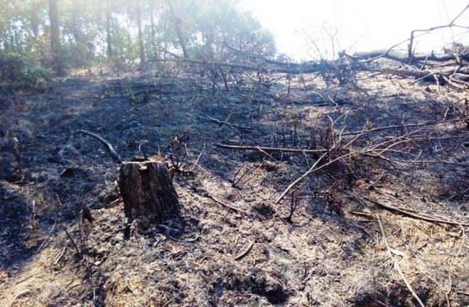 Hai nguoi chet chay nghi do dot thuc bi hinh anh 1 Hiện trường vụ cháy rừng ở xã Bắc Sơn khiến một người chết cháy.