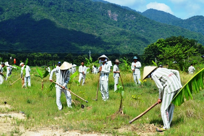 Các phạm nhân trại giam Thủ Đức trồng cây lưu niệm trước ngày đặc xá.