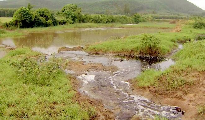 Công ty mía đường Tuy Hòa xả thải chưa qua xử lý ra môi trường