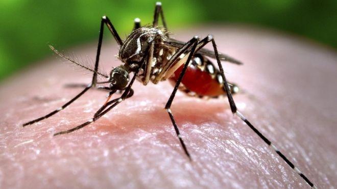 Cach phong tranh nhiem virus Zika hinh anh 1