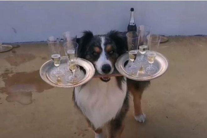 Cho mang 6 ly Champagne khong roi vo o Italy hinh anh