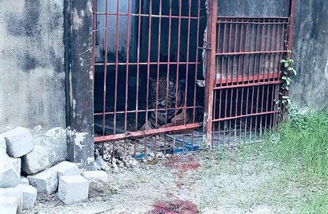 Người bị hổ cắn đứt tay từng làm việc tại khu du lịch Thanh Cảnh