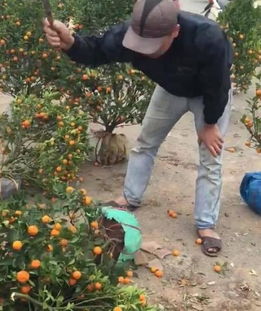 Nhieu cho hoa xa rac la liet chieu 30 Tet hinh anh 1