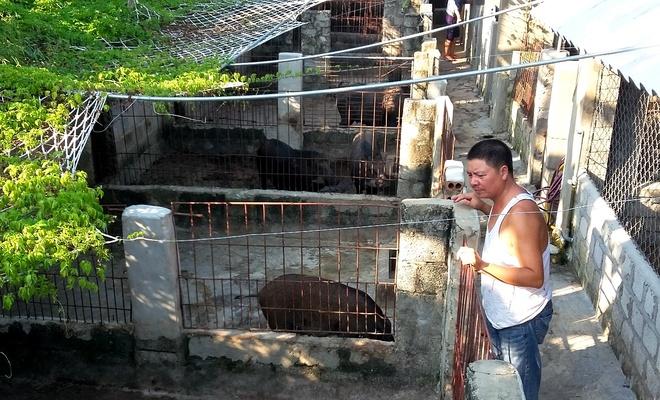 Hai lan mat tram trieu vi nuoi lon rung lai hinh anh 1 Anh Long bên trang trại nuôi lợn rừng lai của gia đình mình. Ảnh: Nguyễn Dương.