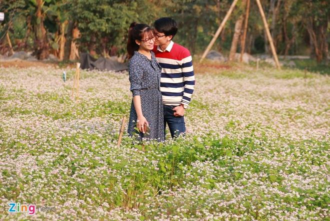 Vuon hoa tam giac mach o Ninh Binh hinh anh 10