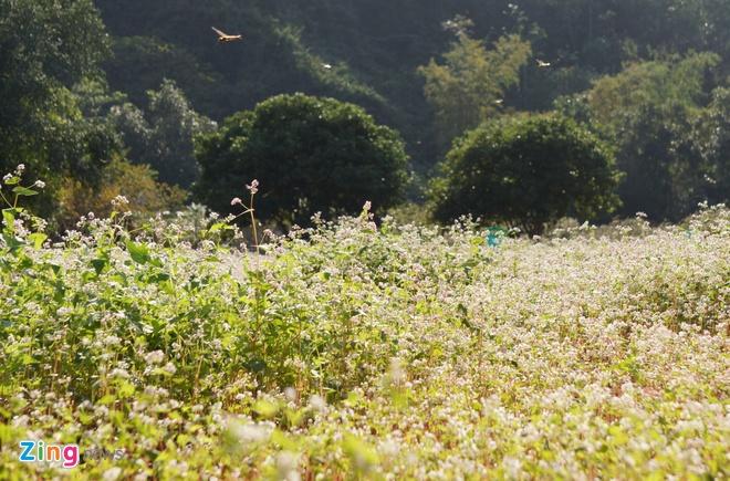 Vuon hoa tam giac mach o Ninh Binh hinh anh 8