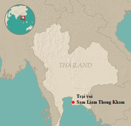 Voi giam chet huong dan vien Trung Quoc o Thai Lan hinh anh 2