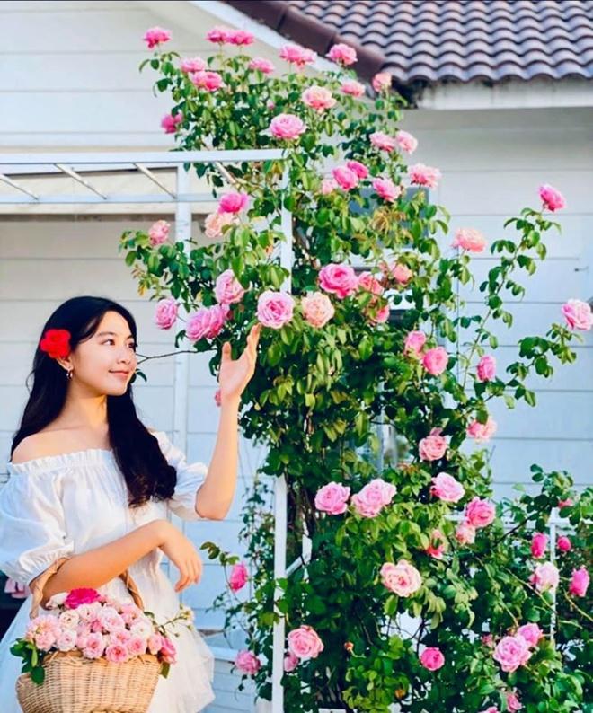 Vuon ngap tran hoa, trai cay cua gia dinh Quyen Linh hinh anh 10 86663443_2609496789148167_1789059813875908608_o.jpg