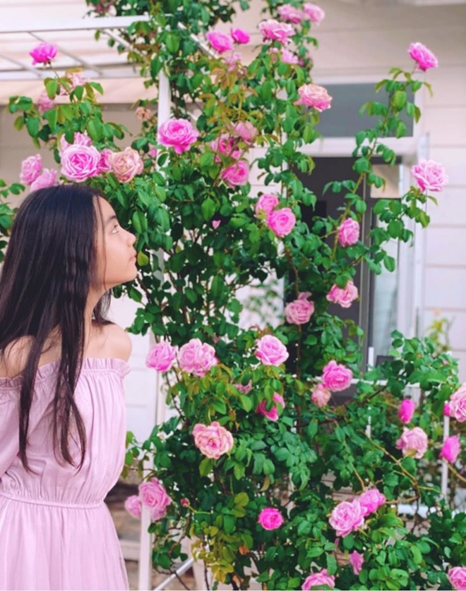 Vuon ngap tran hoa, trai cay cua gia dinh Quyen Linh hinh anh 9 87041347_2609496835814829_3013376130347433984_o.jpg