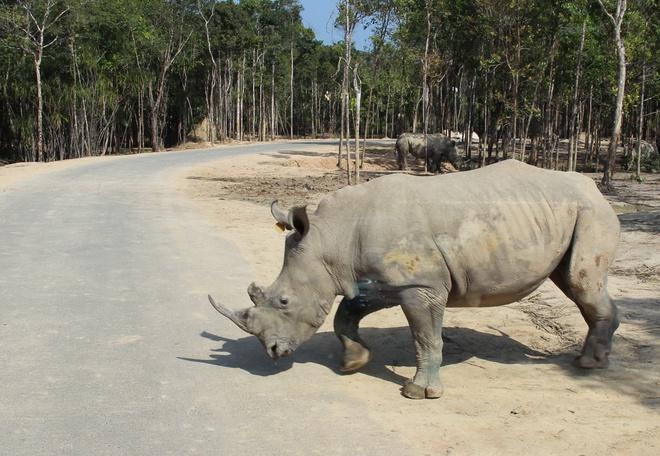 Nhung van de ve te giac o Safari Phu Quoc hinh anh