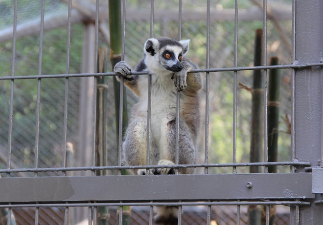 Thu chet o Vinpearl Safari: Nhung con so bat thuong hinh anh