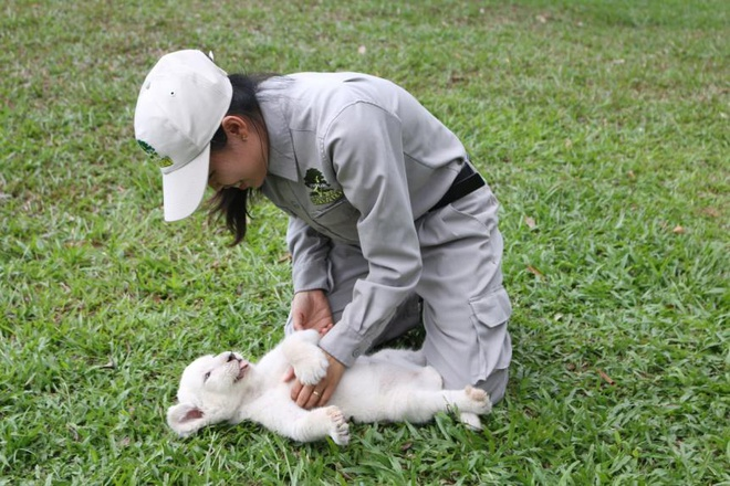 Safari Phu Quoc anh 1