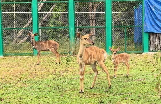 Safari Phu Quoc anh 4