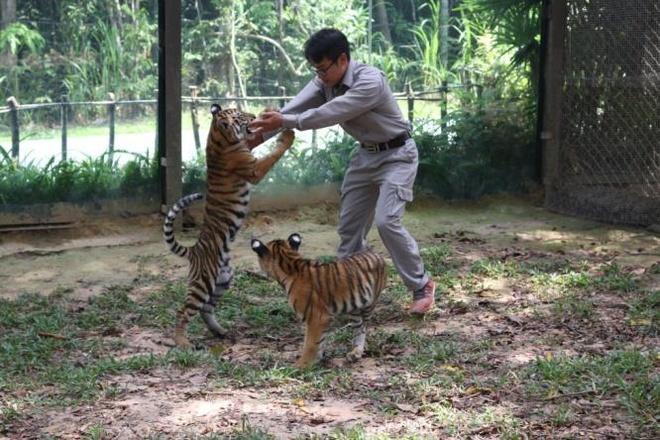 Safari Phu Quoc anh 5