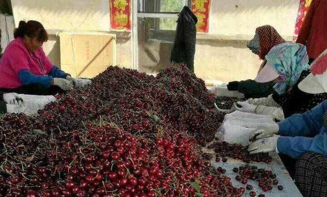 Cherry Trung Quoc gia 120.000 dong mot kg tran ngap cho mang hinh anh
