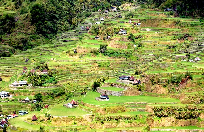 ruong bac thang philippines anh 5