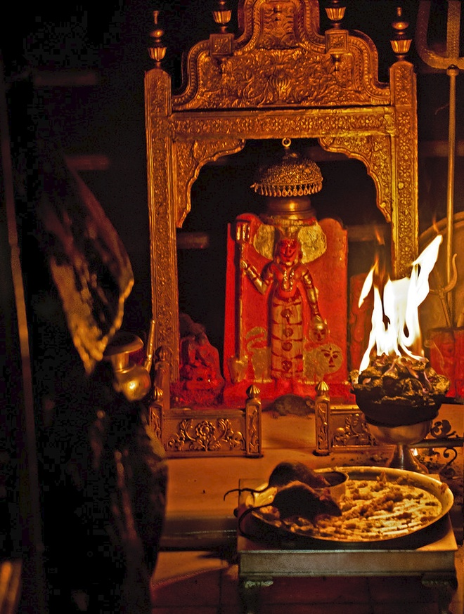 Den An Do cho hon 20.000 con chuot song tu do hinh anh 1