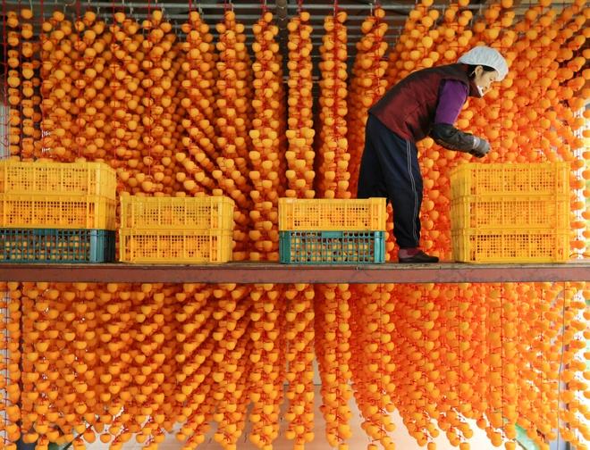 6. Hongsi, gotgam, bansi... là những cách phân biệt loại  trái cây mùa thu nào ở Hàn Quốc?                         CamHồngBơ                         Hồng là đặc sản trái cây mùa thu nổi tiếng  ở Hàn Quốc. Để phân biệt một số loại hồng, người ta gọi bằng những tên như: hongsi, tức hồng chín giòn, có màu vàng cam hoặc đỏ sẫm,  gotgam, tức hồng treo gió, hay bansi, tức hồng không hạt... Ảnh: Seoul Kr.