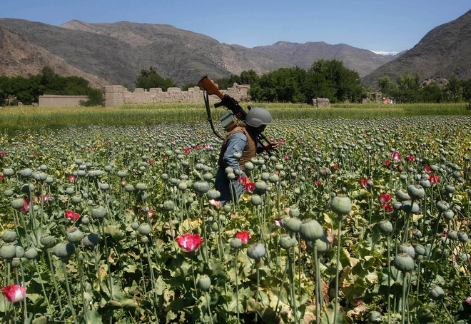 Thu linh hang dau Taliban bi tieu diet tai Afghanistan hinh anh 2