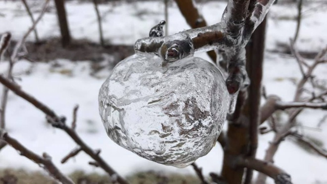 'Táo ma' xuất hiện trong đợt lạnh kỷ lục ở Mỹ