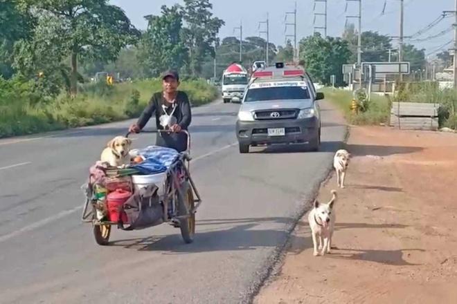 Người chồng đi bộ khắp nước Thái cùng tro cốt của vợ và 3 con chó