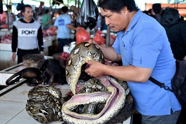 Cho thu noi tieng Indonesia ngung ban thit doi vi lo so virus corona hinh anh 1 600x_1.jpg