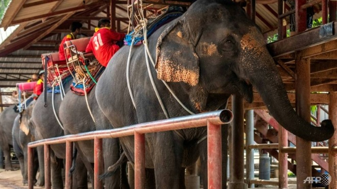 Khach Trung Quoc o nha vi virus corona, du lich Dong Nam A lao dao hinh anh 1 business_is_also_slow_at_the_chang_siam_elephant_park_in_pattaya_a_few_hours_south_of_bangkok_1581828226190_3.jpg