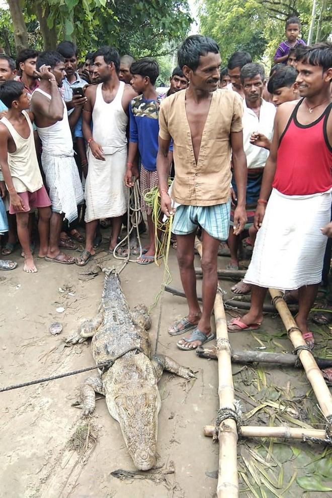 Dân làng Midania sau khi bắt được con cá sấu. Ảnh: AFP.