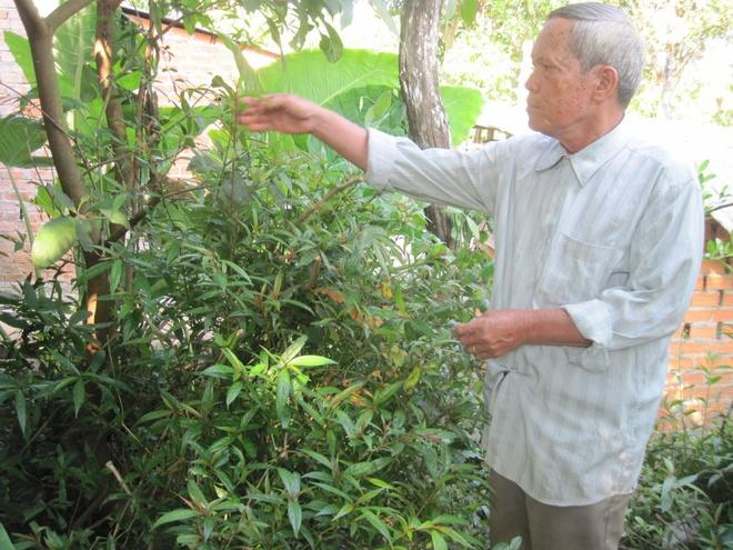 Ong lao 'khac tinh' cua ran doc o Tay Nguyen hinh anh