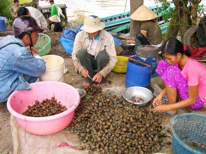 Nong dan 'nuoi' oc buou vang ban cho thuong lai Trung Quoc hinh anh 9